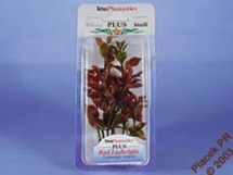 Rostlina Red Ludwigia Plus 15cm